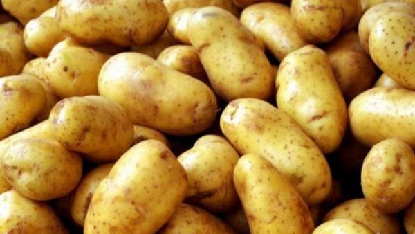 Kartof insanı belə ZƏHƏRLƏYİR - Mütəxəssislərdən VACİB XƏBƏRDARLIQ