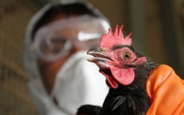 Slovakiyada quş qripi virusu aşkarlanıb