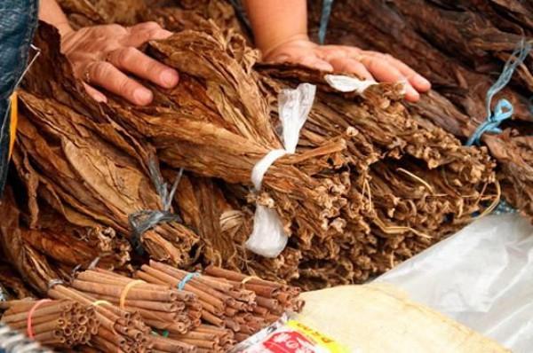 Azərbaycanda tütün istehsalının artırılması planlaşdırılır