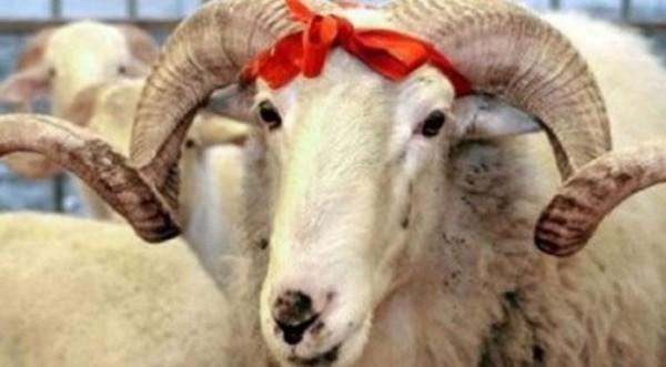 Dünya müsəlmanları Qurban bayramını karantində qeyd edir