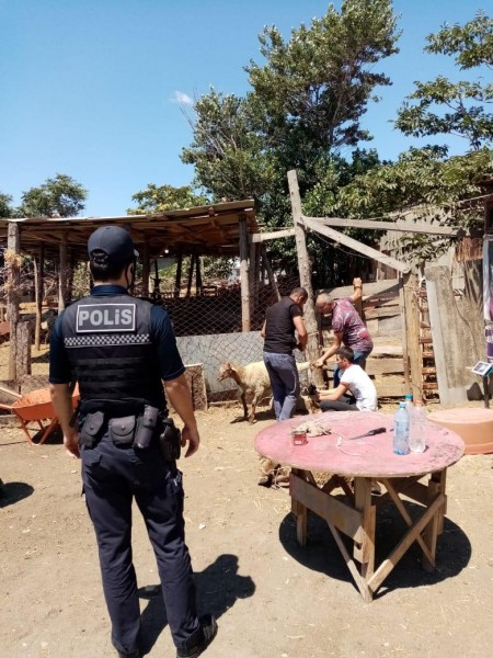 Polis qurbanlıq heyvanların satış yerlərində reyd keçirdi